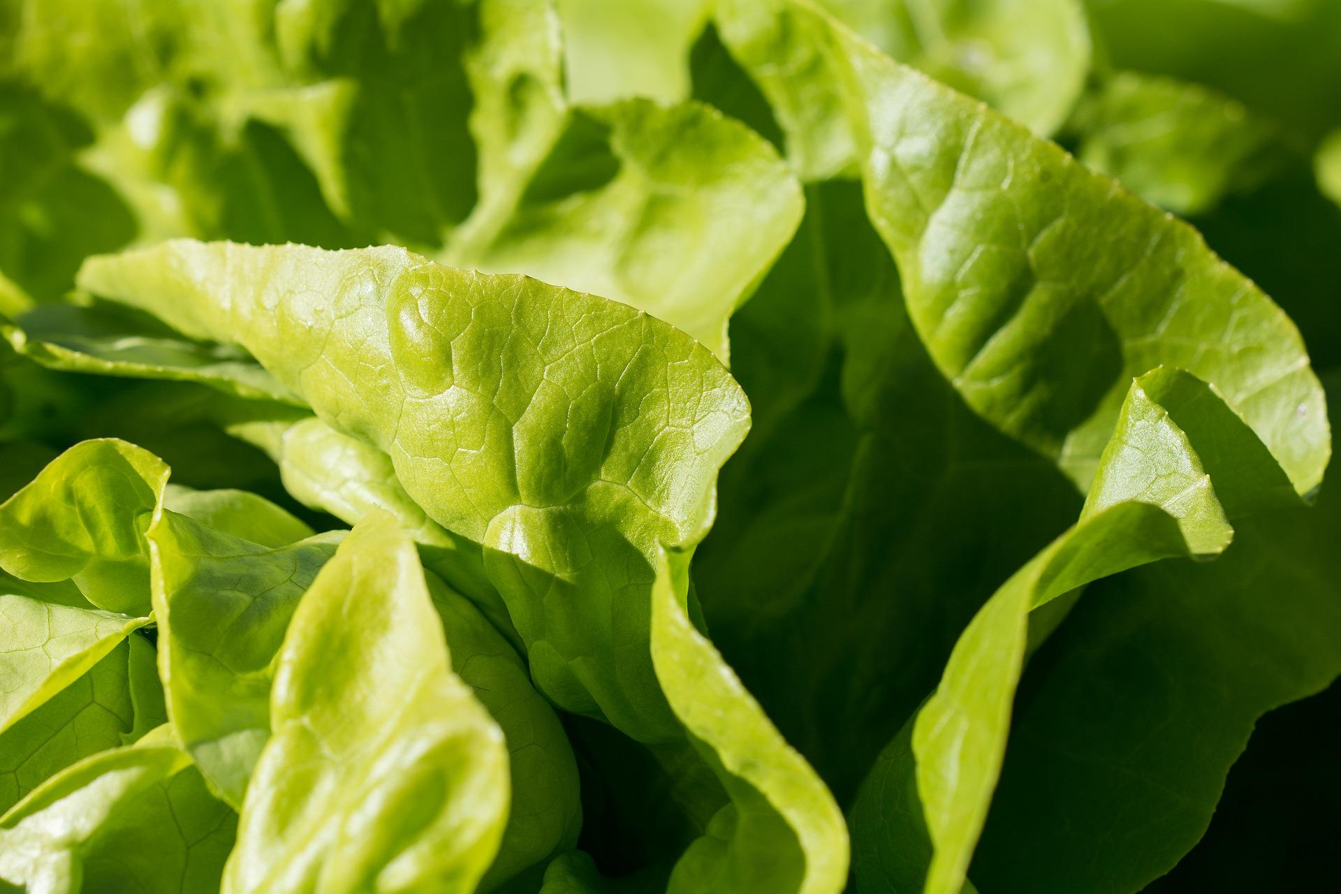 Grillezett saláta kék sajttal