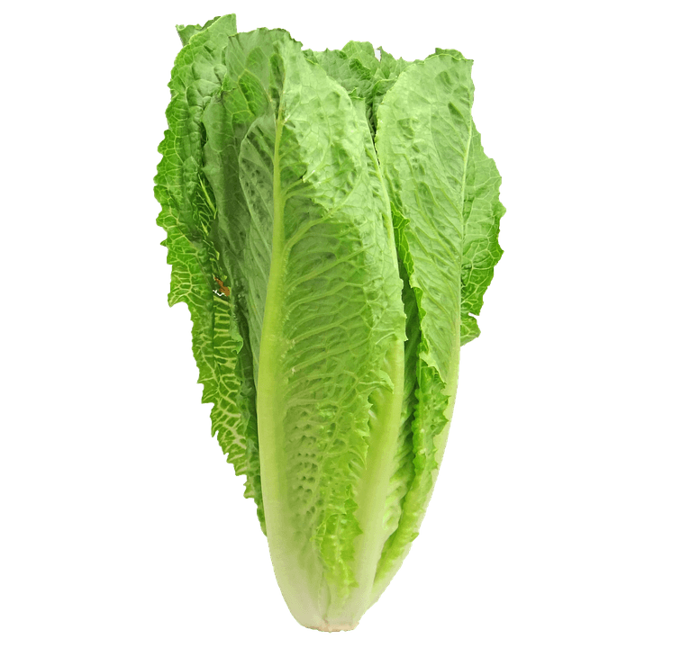 Grillezett római saláta rákkal